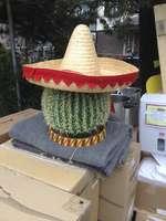30 Jahre Kaktusbar