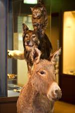Innenbereich Naturmuseum Olten