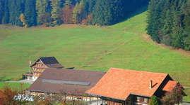 Bauernhof Hintertann: Campingplatz