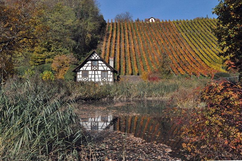 Wein und Wohlstand