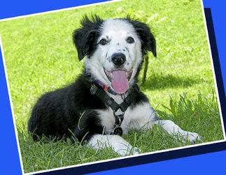 hund-hobby-sport Welpenstunden, Junghundekurse, Hundetraining - 1